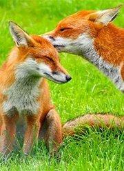 动物世界灵趣自然