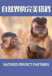 自然世界:自然界的完美搭档
