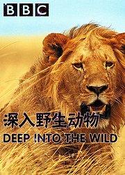 深入野生动物