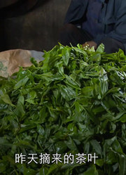 普洱茶制作全过程