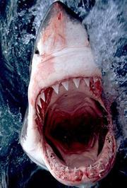 鲨人魔来袭
