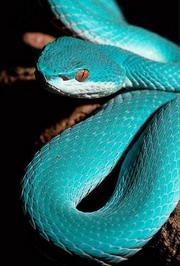 蛇之惊艳奇观